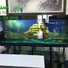 Làm bể cá rồng tại Hà Nội