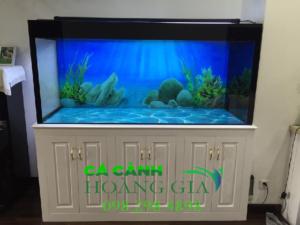 Bán bể cá rồng tại Hà Nội uy tín chất lượng đã làm nên thương hiệu Bể cá Hoàng Gia