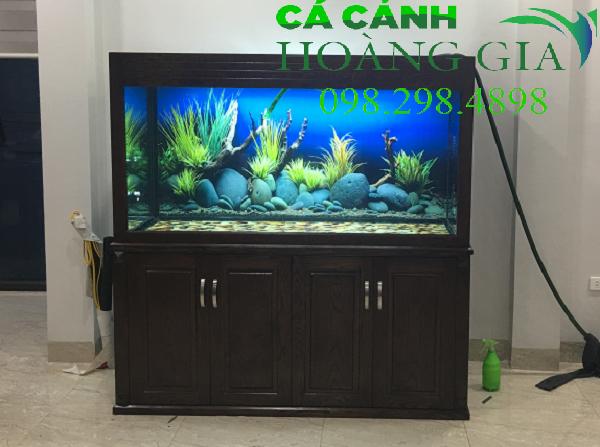 Bể cá rồng hiện đại không đường ống được Bể cá Hoàng Gia thi công tại khu đô thị Văn Khê - Hà Đông