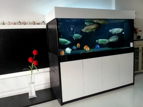 bể cá rồng hiện đại