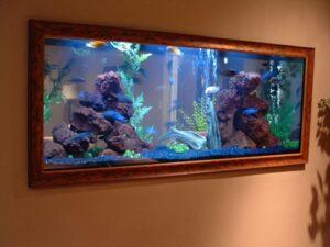 làm bể cá cảnh treo tường đẹp giá rẻ