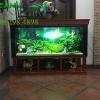 thiết kế bể cá thủy sinh tại hà nội