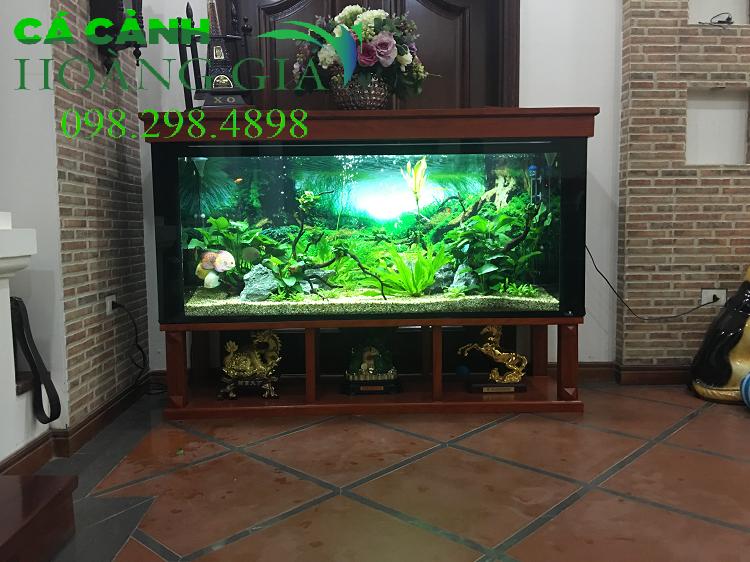 Bể cá thủy sinh xanh mát giúp mọi người cảm thấy dễ chịu khi ngắm bể cá