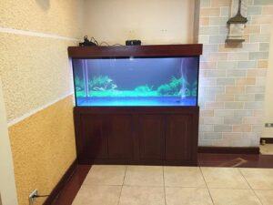 Thiết kế bể cá rồng nhà anh Khánh