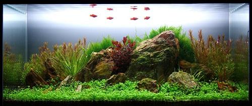 thiết kế bể cá thủy sinh