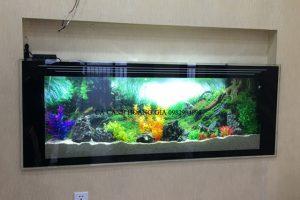 bể cá treo tường siêu mòng