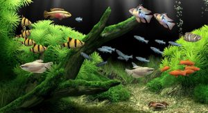 ý nghĩa bể cá thủy sinh
