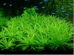 lợi ích cây thủy sinh