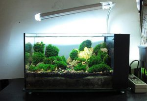 đèn bể cá