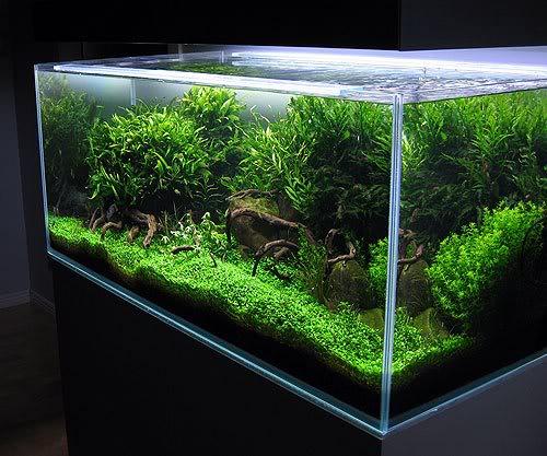 hồ cá thủy sinh giá bao nhiêu