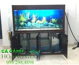 Báo giá bể cá rồng tại Hà Nội