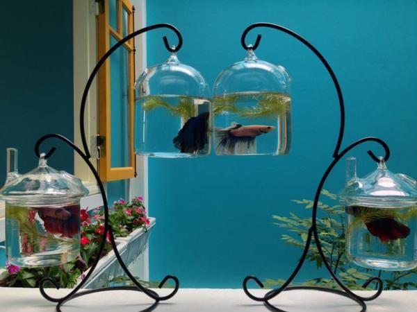 bể cá cảnh mini để bàn Hà Nội