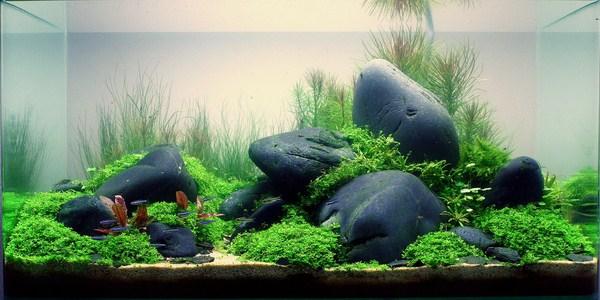 phụ kiện bể cá thủy sinh