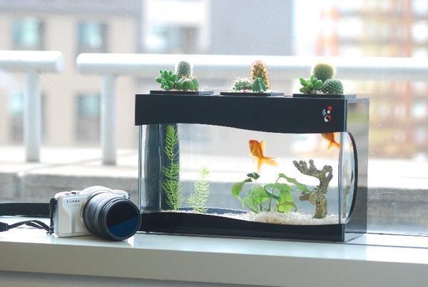 giá bể cá mini để bàn