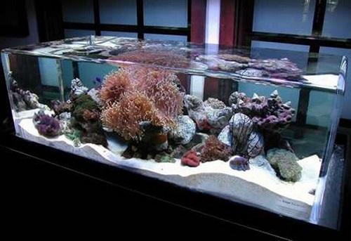 địa chỉ mua bán bể cá cảnh