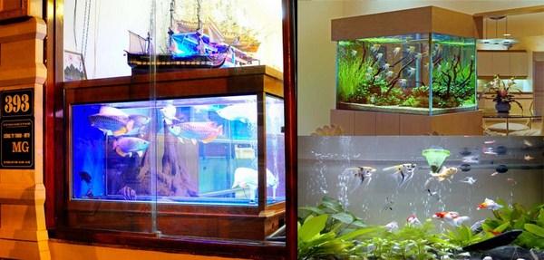 Mua bể cá rồng ở Hà Nội
