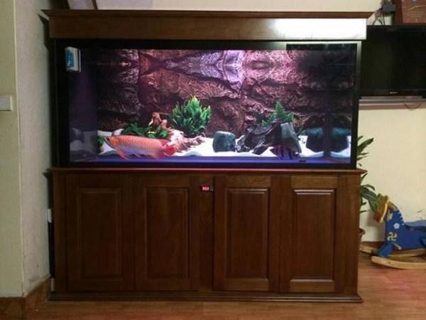 phong thủy bể cá rồng