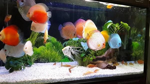 bể cá phong thủy đẹp