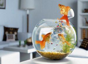 bể cá để bàn Hà Nội