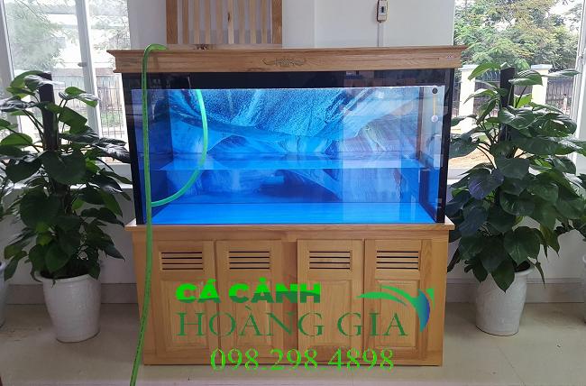 Bể cá rồng được thiết kế bởi Bể cá Hoàng Gia tại Bắc Giang