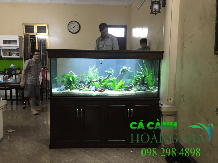 Bể cá thủy sinh trang trí cây thật tao thêm sự tươi mát cho căn phòng của bạn