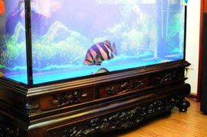 Bể cá rồng có đế chân