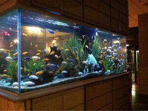 bể cá đúc tại hà nội 5