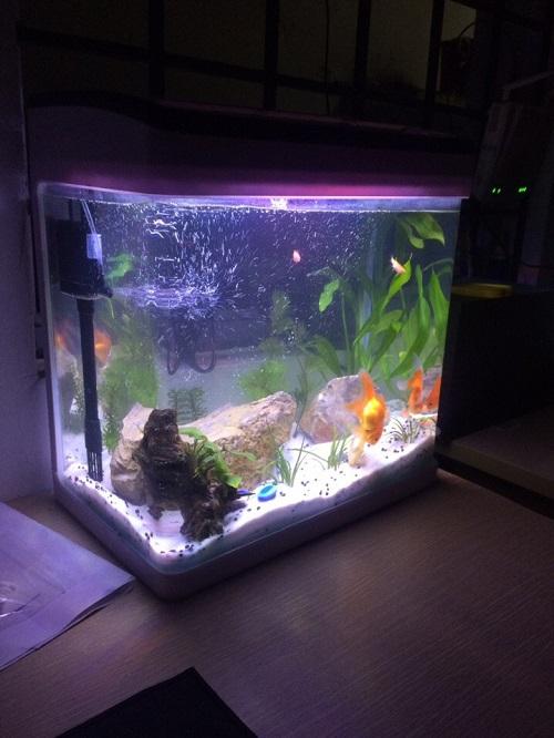 giá bể cá đúc ở Hà Nội