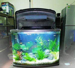 bể cá đúc tại hà nội
