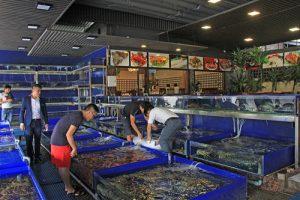 thi công bể hải sản nhà hàng cao cấp