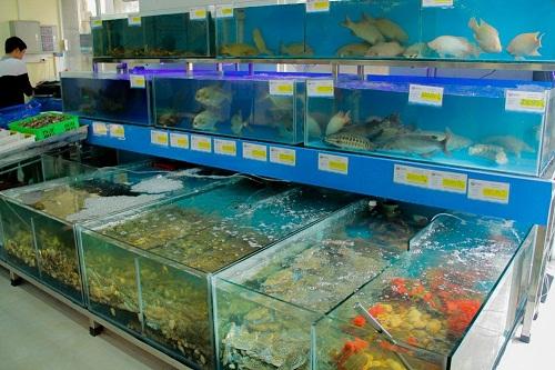 bể hải sản cao cấp