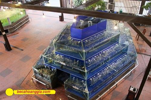 bể cá hình tháp