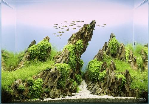 đá thủy sinh