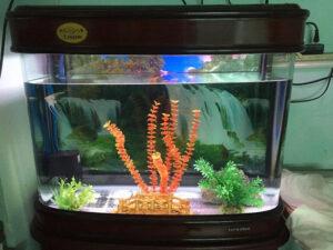 bể cá đúc tại hà nội 1