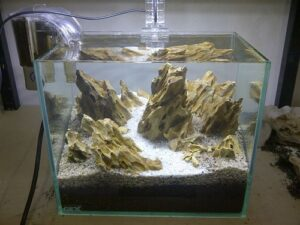 hồ cá đá tiger
