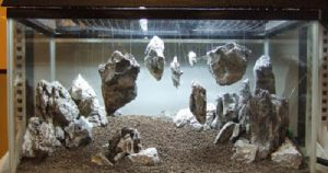 hồ cá đá treo