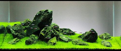 Cách xếp đá trong hồ thủy sinh