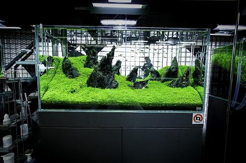 các loại cây thủy sinh không cần co2