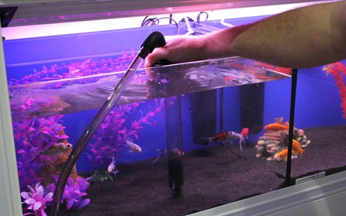 Cách xử lý nước hồ cá bị xanh