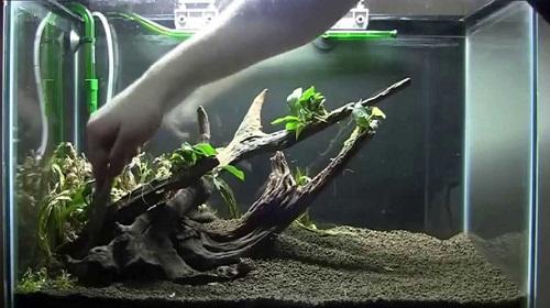 trang trí bể thủy sinh