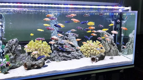 bể cá nước mặn