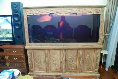tủ cá cảnh bằng gỗ