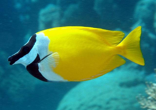 cá nước mặn