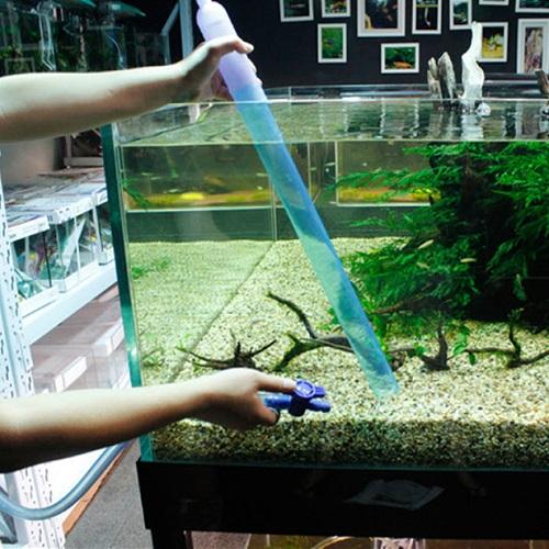 cách diệt tảo xanh trong hồ cá