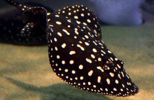 các loại cá nuôi chung được với cá rồng