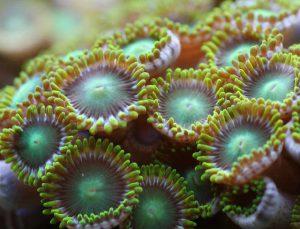 san hô bể cá nước mặn