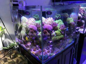bể cá nước mặn 2