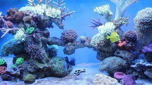 bể cá nước mặn 6