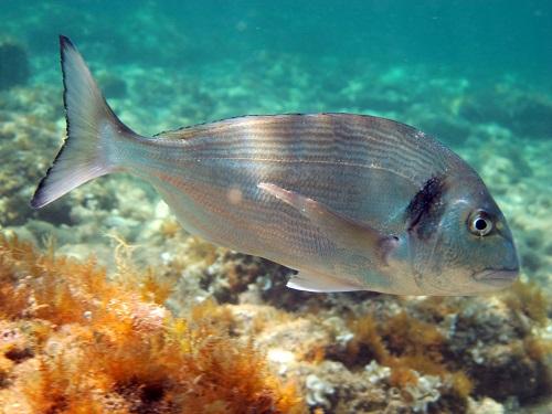Tên và hình ảnh các loại cá biển
