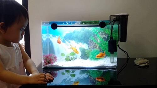 Bán bể cá cảnh mini tại Hà Nội